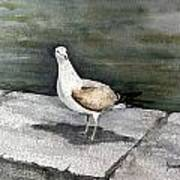 St Augustine Gull Art Print