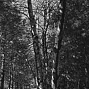 St-denis Woods 2 Art Print