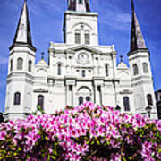 St. Louis Cathedral And Flowers In New Orleans Art Print by Paul Velgos