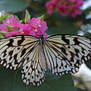 St. Louis Zoo Butterfly Art Print