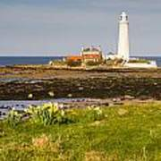 St Marys Lighthouse With Daffodils Art Print