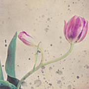 Stained Tulip Art Print by Cristina-Velina Ion