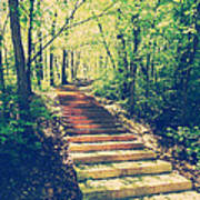 Stairway Into The Forest Art Print