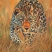 Stalking Leopard Art Print