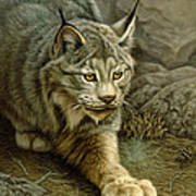 Stalking Lynx Art Print