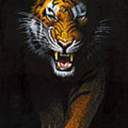 Stalking Tiger Art Print