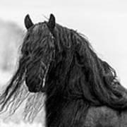 Stallion Beauty Art Print