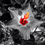 Star Bright Hibiscus Selective Coloring Digital Art Art Print