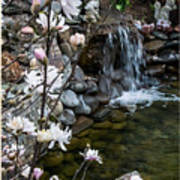 Star Magnolia And Flowing Water Art Print
