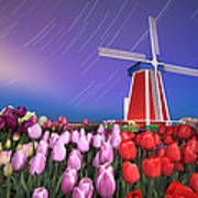 Star Trails Windmill And Tulips Art Print