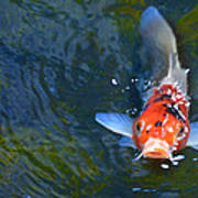 Stare Down With A Koi Art Print