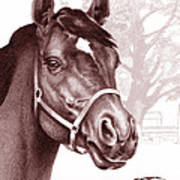Stare Of The Stallion Art Print by Patricia Howitt