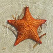 Starfish 1 Of Bottom Harbour Sound Art Print