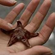 Starfish 1 Art Print