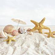 Starfish And Seashells  At The Beach Art Print by Sandra Cunningham
