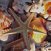 Starfish And Sun Rays Art Print