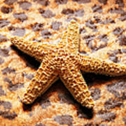 Starfish Enterprise Art Print by Andee Design