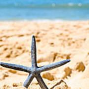 Starfish On Algarve Beach Portugal Art Print