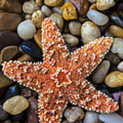 Starfish On Rocks Art Print