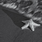 Starfish On The Beach Bw Art Print