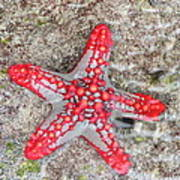 Starfish Wonder Art Print