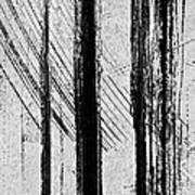 Starlight Behind The Trees Art Print