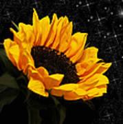 Starlight Sunflower Art Print