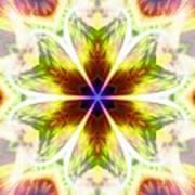 Starseed Rainbow Art Print
