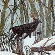 Startled Buck - White Tail Deer Art Print