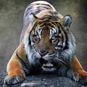Startled Tiger Art Print
