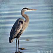 Stately-great Blue Heron Art Print