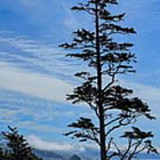 Stately Pine Art Print