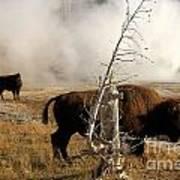 Steaming Bison Art Print
