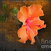 Steely Hibiscus Art Print by The Stone Age