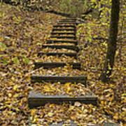 Step Trail In Woods 14 Art Print