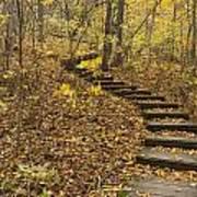 Step Trail In Woods 16 Art Print