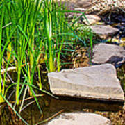 Stepping Stones Across Creek On Lower Palm Canyon Trail In Indian Canyons Near Palm Springs-ca Art Print