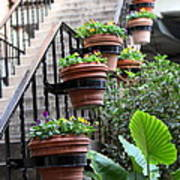 Steps Oh Plants Art Print