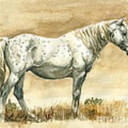 Sterling Wild Stallion Of Sand Wash Basin Art Print by Linda L Martin