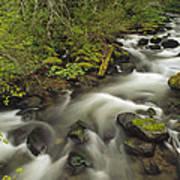 Still Creek Mt Hoodoregon Art Print