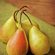 Still Life Of Pears Art Print