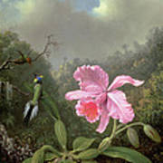 Still Life With An Orchid And A Pair Of Hummingbirds Art Print by Martin Johnson Heade