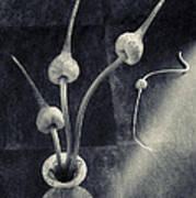 Still Life With  Garlic Art Print