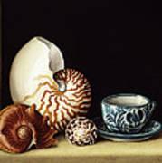 Still Life With Nautilus Art Print
