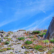 Still Standing. Near Mount St. Helens 2012 Art Print