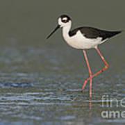 Stilt In Duckweed Art Print