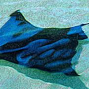 Sting Ray Art Print