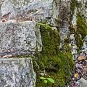 Stone And Moss Art Print