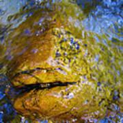 Stone Fish Art Print