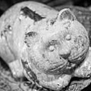 Stone Kitty Art Print